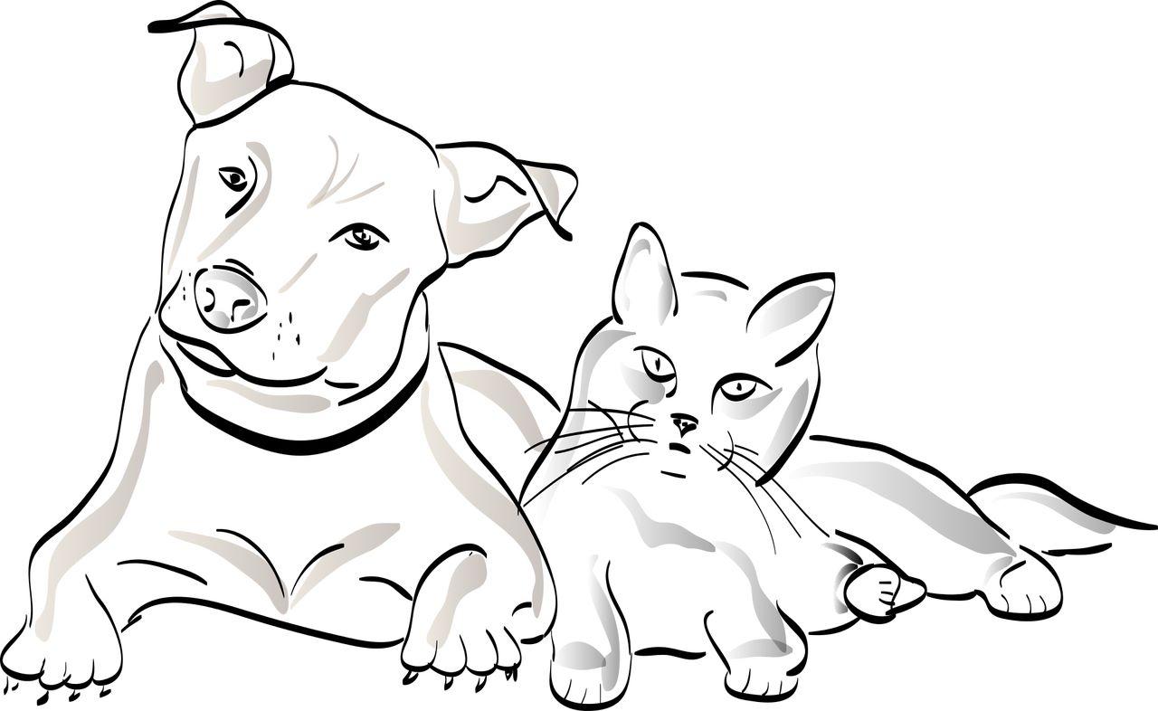 comparateur mutuelle chien et chat